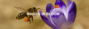 what's-in-bloom