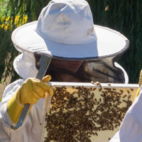 Planning for Bees