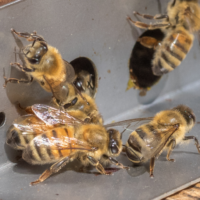 Beekeeping 102: Managing Your Hives