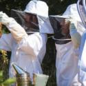 Hands-on Workshop: Beginning Beekeeping