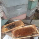Used Deep and Med 10 and 8 frame boxes / frames